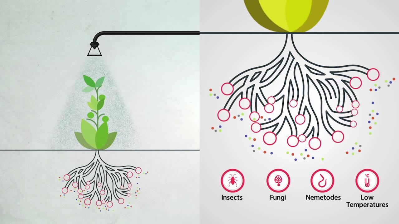 bón lá để phát triển rễ