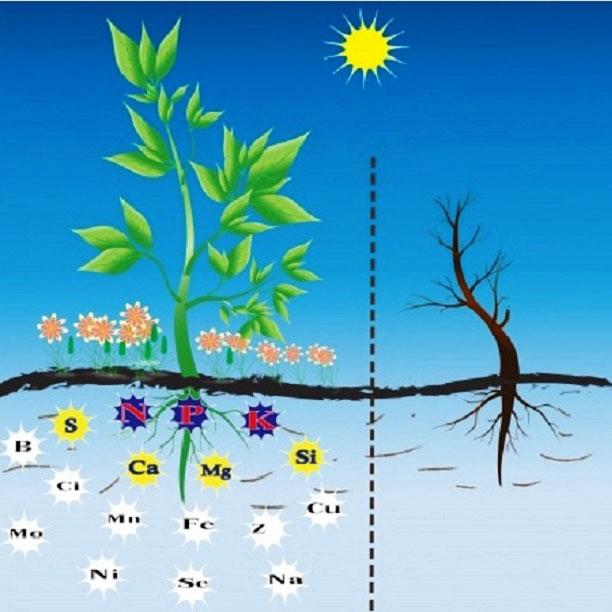 Rễ hấp thụ chất dinh dưỡng