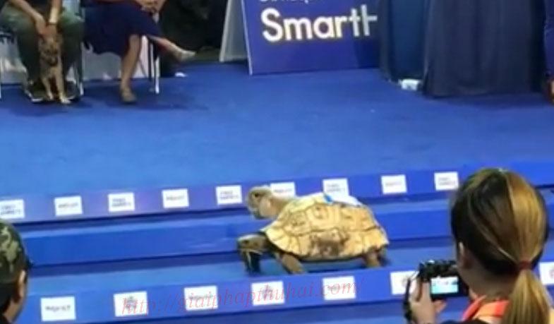 Thỏ và rùa chạy đua thời đại mới