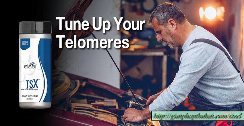 Sản phẩm TSX của công ty SISEL giúp nâng cấp telomeres trong nhiễm sắc thể của bạn