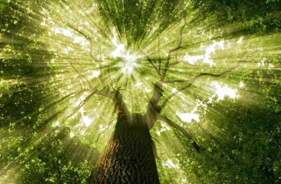 Chìa khóa thành công cây xanh tỏa nắng