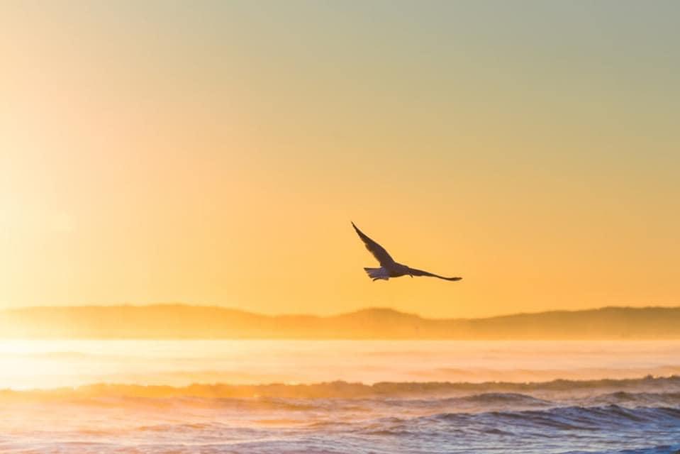 Chim đại bàn bay và chìa khóa thành công
